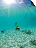 Le Maitai Dream Fakarava Resort, Fakarava, Tuamotus, French Polynesia Plakaty autor Michele Westmorland