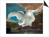 The Threatened Swan Affiche par Jan Asselijn