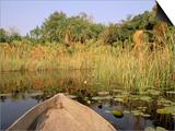 Mokoro through Reeds and Papyrus, Okavango Delta, Botswana Plakater af Pete Oxford