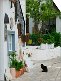 Street View with Black Cat, Manolates, Samos, Aegean Islands, Greece Posters by Walter Bibikow