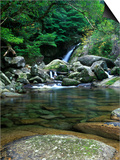 Shiratani Unsuikyo, Yakushima, Kagoshima, Japan Posters by Rob Tilley