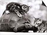 Two Young Kittens Playing with a Slow Moving Giant Tortoise, 1983 Art