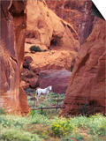 Red Rock, White Horse, White Mountains, Canyon De Chelly, Arizona, USA Prints by Nancy Rotenberg