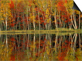 Fall Foliage and Birch Reflections, Hiawatha National Forest, Michigan, USA Print by Claudia Adams