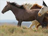 Wild Horses Running, Carbon County, Wyoming, USA Posters by Cathy & Gordon Illg