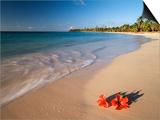 Tropical Paradise, Tabyana Beach, Roatan, Honduras Posters by Stuart Westmorland