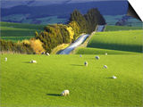 Farmland, South Otago, South Island, New Zealand Posters by David Wall
