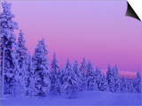 Sunset in the Lappish Winter, Finland Posters by Daisy Gilardini