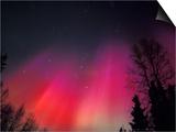Curtains of Northern Lights above Fairbanks, Alaska, USA Prints by Hugh Rose