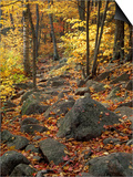 Fall Foliage on the Tarn Trail of Dorr Mountain, Maine, USA Posters by Jerry & Marcy Monkman