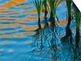 Reflections on Malheur River at Sunset, Oregon, USA Kunstdrucke von Nancy Rotenberg