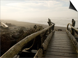 Driftwood Bridge Entrance from Trail, Kalaloch Beach, Olympic National Park, Washington, USA Art by Trish Drury