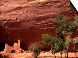 Anasazi Antelope House Ruin and Cottonwood Trees, Canyon de Chelly National Monument, Arizona, USA Láminas por Alison Jones