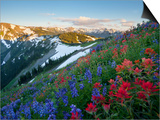 Indian Paintbrush and Lupine, Olympic National Park, Washington, USA Art by Gary Luhm