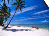 Girl on Beach with Coconut Palm Trees, Tambua Sands Resort, Coral Coast, Fiji Posters by David Wall