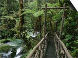 Trail in Cloud Forest, La Paz Waterfall Gardens, Central Valley, Costa Rica Prints by Rolf Nussbaumer