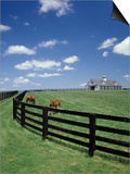 Thoroughbred in the Countryside, Kentucky, USA Posters by Michele Molinari