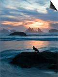 Seagull Silhouette on Coastline, Bandon Beach, Oregon, USA Poster von Nancy Rotenberg