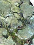 Snow and Moss on Live Oak Tree in Cuyamama Rancho State Park, California, USA Poster by Christopher Talbot Frank