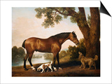 A Bay Hunter, a Springer Spaniel and a Sussex Spaniel Posters by George Stubbs
