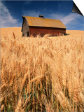View of Barn Surrounded with Wheat Field, Palouse, Washington State, USA Poster by Stuart Westmorland