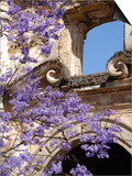 Purple Spring Flowers in Bloom, La Compania de Jesus, Antigua, Guatemala Plakater af Cindy Miller Hopkins