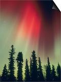 Aurora Borealis, Fairbanks Area, Alaska, USA Posters by Kevin Schafer