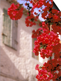 Red Flowers on Main Street, Kardamyli, Messina, Peloponnese, Greece Prints by Walter Bibikow