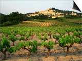 View of Provence Vineyard, Luberon, Bonnieux, Vaucluse, France Print by David Barnes