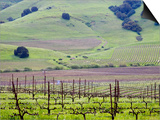 View Overlooking the Viansa Winery, Sonoma Valley, California, USA Prints by Julie Eggers