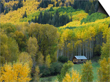 Log Cabin in Fall Colors, Dolores, San Juan National Forest, Colorado, USA Prints by Rolf Nussbaumer