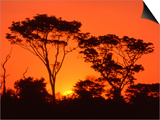 Claudia Adams - Trees Silhouetted by Dramatic Sunset, South Africa - Sanat
