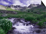 Wildflowers, Ouray, San Juan Mountains, Rocky Mountains, Colorado, USA Print by Rolf Nussbaumer