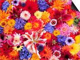 Dahlia, Oriental Lilies, Sunflower, Petunia, Zinnia, Hydrangea Bloom, Sammamish, Washington, USA Obra de arte por Darrell Gulin