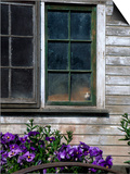 Old Barn with Cat in the Window, Whitman County, Washington, USA Prints by Julie Eggers