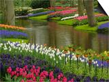 Tulip and Hyacinth Garden, Keukenhof Gardens, Lisse, Netherlands, Holland Posters by Adam Jones