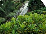 Shaw Park Gardens, Jamaica, Caribbean Kunstdrucke von Robin Hill