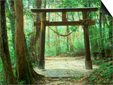 Mountain Shrine, Yakushima, Kagoshima, Japan Prints by Rob Tilley
