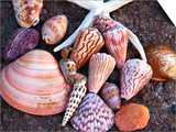 Seashells Along the Gulf of California, Loresto, Mexico Art by Chuck Haney