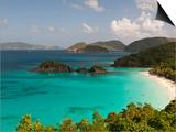 Underwater Snorkeling Trail, St John, United States Virgin Islands, USA, US Virgin Islands Prints by Trish Drury