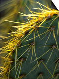 Cactus, Joshua Tree National Park, California, USA Print by Janell Davidson