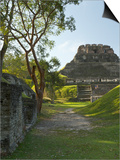 El Castillo Pyramid, Xunantunich Ancient Site, Cayo District, Belize Posters by William Sutton