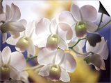 Wild Orchids, Malaysia Poster by Michele Molinari