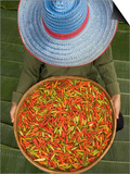 Farmer Selling Chilies, Isan region, Thailand Prints by Gavriel Jecan