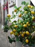 Lemons, Positano, Amalfi Coast, Campania, Italy Poster by Walter Bibikow