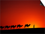 Camel Caravan at Sunrise, Silk Road, China Posters by Keren Su