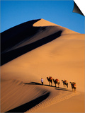 Camel Caravan at Sunset, Silk Road, China Prints by Keren Su