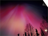 Curtains of Colorful Northern Lights Above Fairbanks, Alaska, USA Prints by Hugh Rose