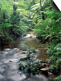 Rainforest Tree Fern and Stream, Uganda Posters af Gavriel Jecan