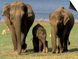 Asian Elephant Family, Nagarhole National Park, India Prints by Gavriel Jecan